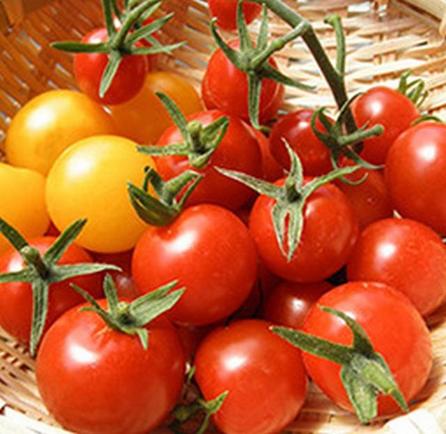 誰でも気軽に始められるプランター菜園。家庭菜園で一番人気のミニトマトの育て方をご紹介します。
