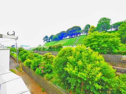 バルコニーからの眺望は緑が溢れています