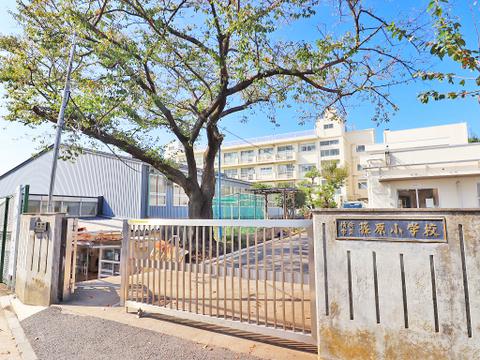 横浜市立篠原小学校 距離500m