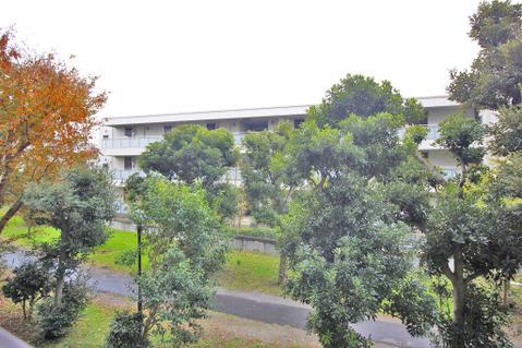 バルコニーからは緑豊かな眺望が臨めます