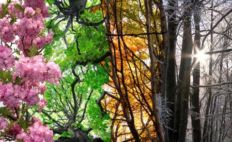 四季を感じよう!自然あふれる都内のスポット4選