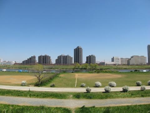 多摩川緑地約50m